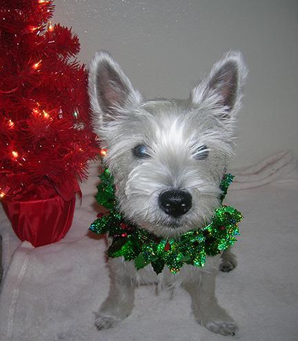 henry-christmas